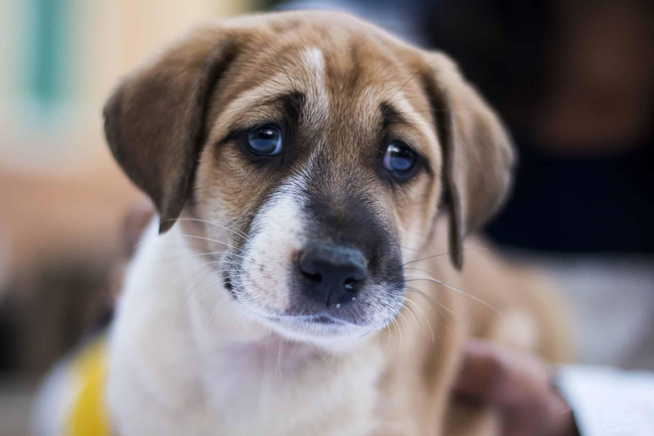 Co zrobić z psem gdy jedziemy na urlop?